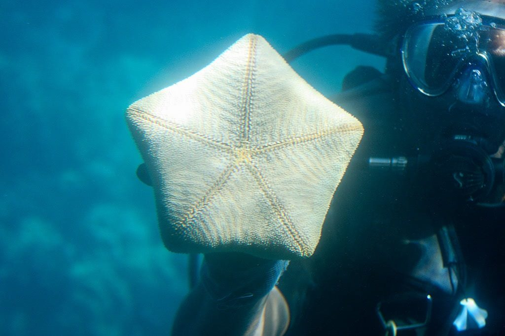 see some sea creatures things to do in maui hawaii