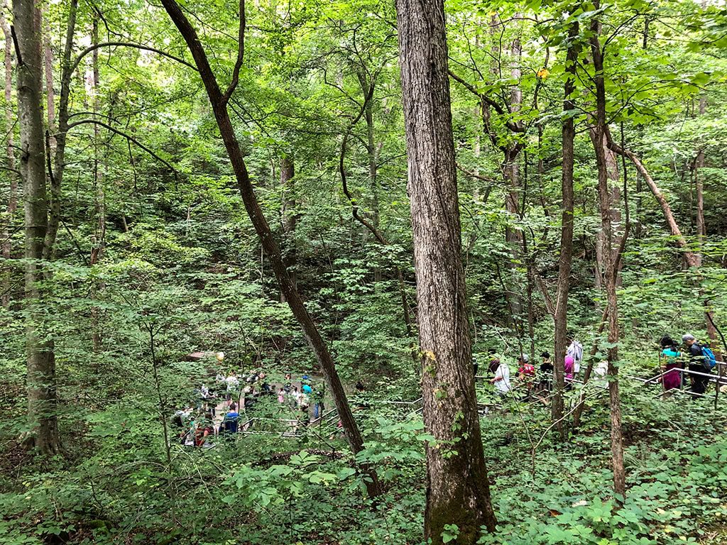 Mammoth Cave National Park Tour Walking Down