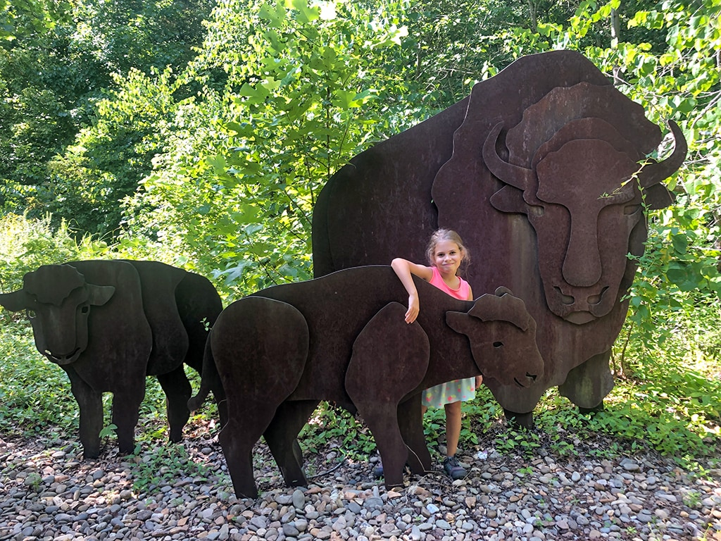 Buffalo at Cumberland Gap National Historical Park